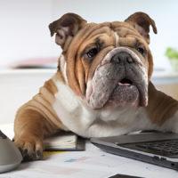 Il cane in ufficio è un'ottima idea!