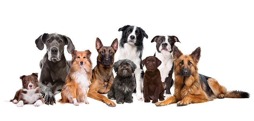 Quanti anni ha il tuo cane? Te lo sveliamo noi