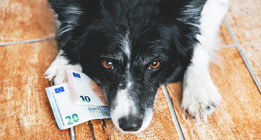 Cani e gatti nella finanziaria 2020, un piccolo regalo di Natale