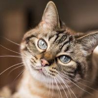 Febbraio, mese della Salute del gatto