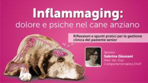 Inflammaging: dolore e psiche nel cane anziano - SECONDA PARTE