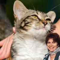 """Il benessere cognitivo dei gatti """"diversamente giovani"""""""