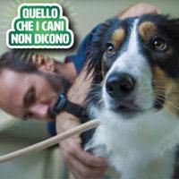 Una nuova video-serie web sui problemi articolari del cane