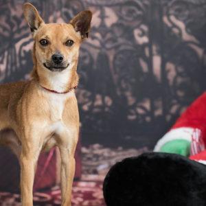 Calendario dell'Avvento: già adottati 5 cani