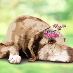 Demenza senile del cane: un semplice prelievo per identificarla precocemente