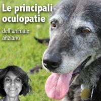 Un webinar sulle malattie oculari del cane anziano