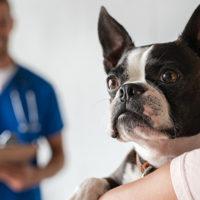 Il ruolo del proprietario nella terapia delle malattie del cane e del gatto