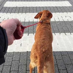 Come migliorare la convivenza con gli animali in città