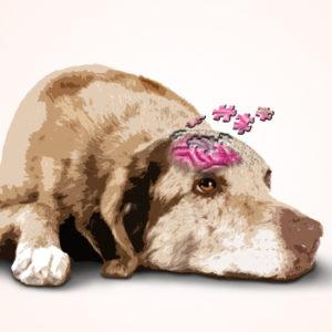 Il cervello del cane anziano secondo Golini