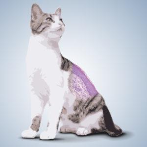 Allergia cutanea felina, dalla diagnosi al trattamento