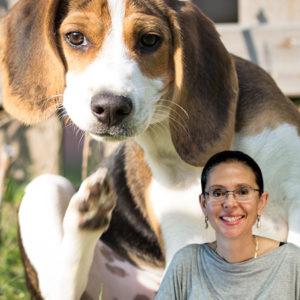 La Dermatite Atopica secondo Chiara Noli: terapia nel cane