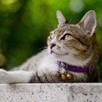 I gatti? Sentinelle ambientali anti-inquinamento