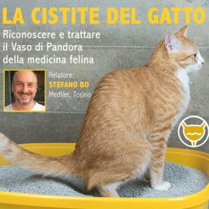 Un webinar sulla cistite felina per medici e tecnici veterinari