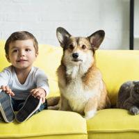 Cani e gatti. Per 9 italiani su 10 fanno parte della famiglia
