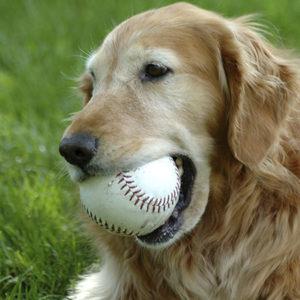 Invecchiamento cerebrale del cane e del gatto: i benefici della PEA