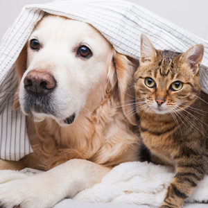 È meglio vivere con un cane o con un gatto?